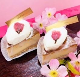 酒粕のチーズケーキ【桜】